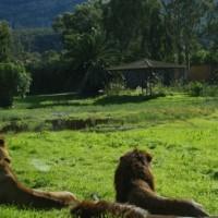 Safari de Vergel, un homenaje en el recuerdo