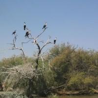 Lista de Parques Nacionales en Senegal