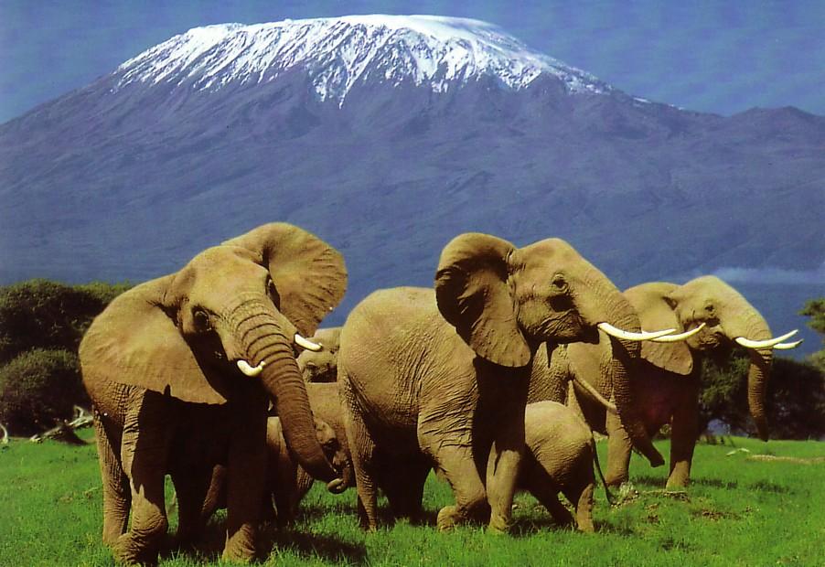 Parque Nacional del Kilimanjaro (Tanzania)