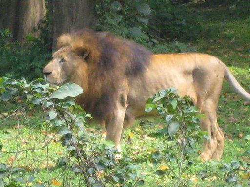 León Uganda
