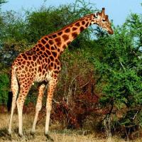 Parque Nacional de Zakouma (Chad)