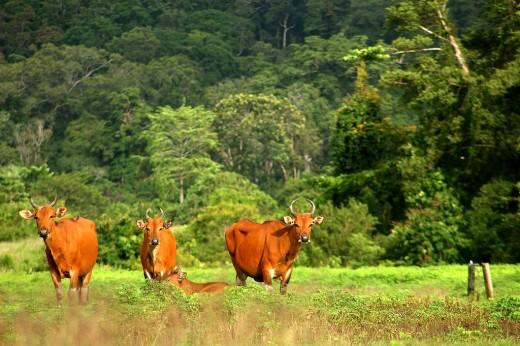Parque Nacional Alas Purwo: naturaleza y surf