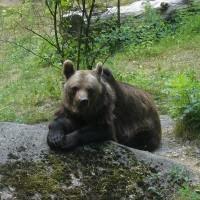 Zoos en Europa: algunos de los mejores sitios para aprender