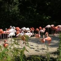 Zoo de Múnich – Tierpark Hellabrunn