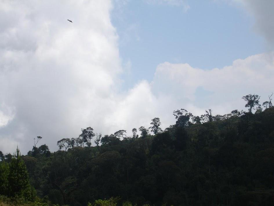 Parque Nacional Kibira